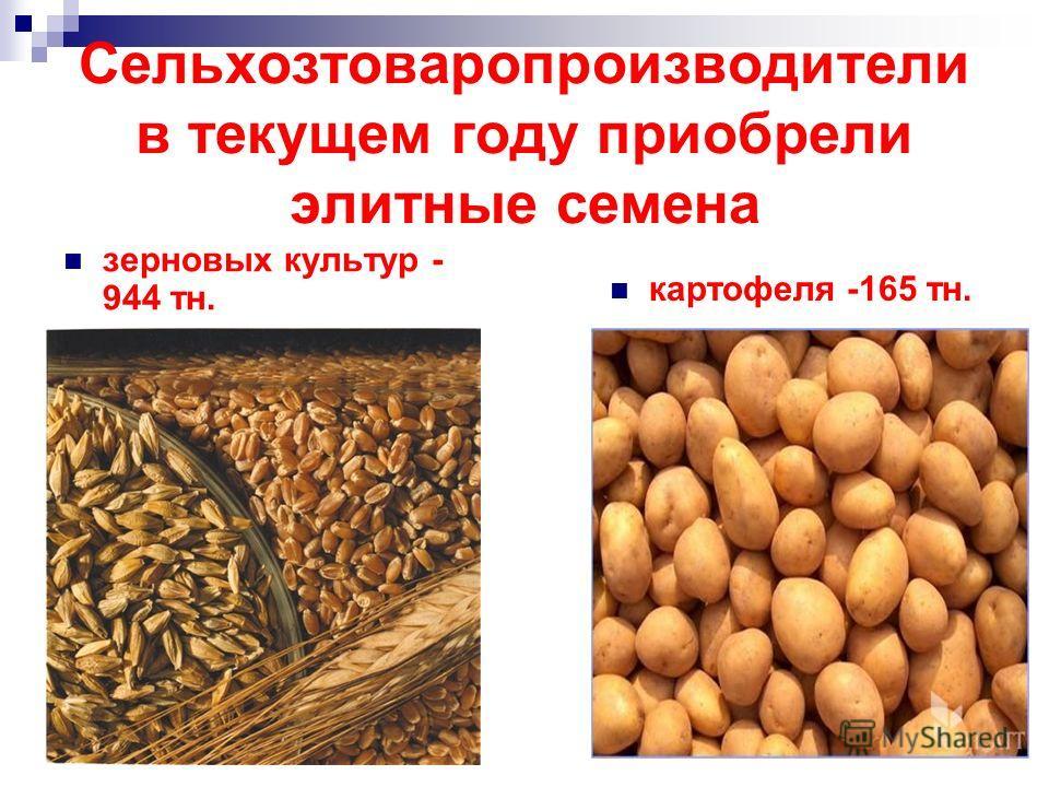 зерновых культур - 944 тн. картофеля -165 тн. Сельхозтоваропроизводители в текущем году приобрели элитные семена