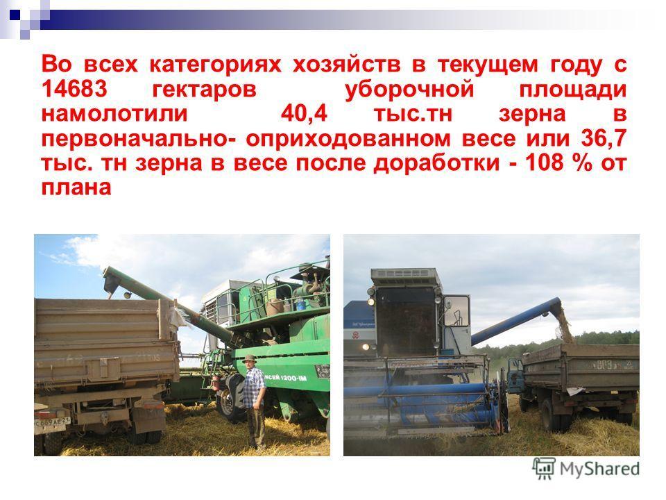 Во всех категориях хозяйств в текущем году с 14683 гектаров уборочной площади намолотили 40,4 тыс.тн зерна в первоначально- оприходованном весе или 36,7 тыс. тн зерна в весе после доработки - 108 % от плана