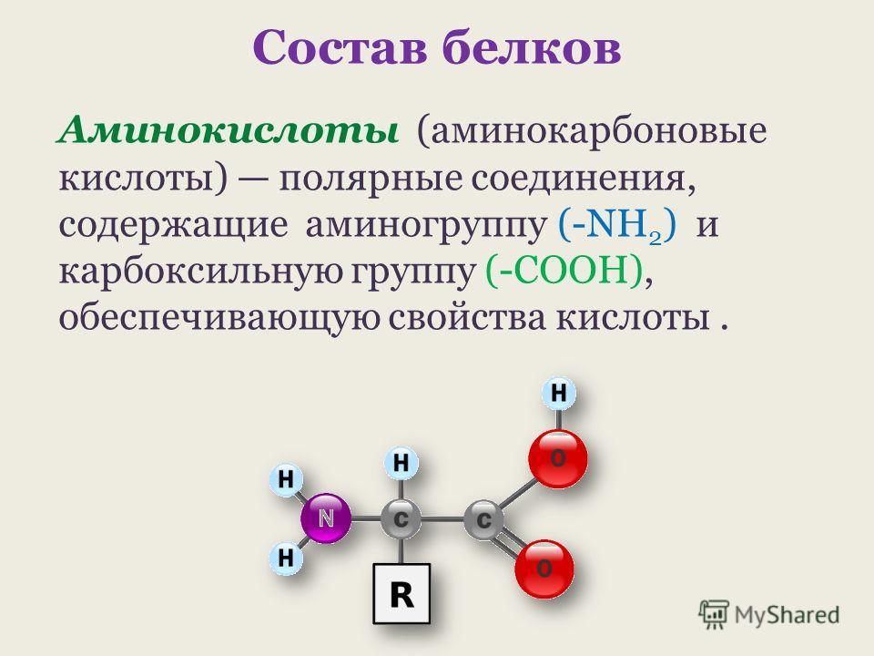 Состав белков Аминокислоты (аминокарбоновые кислоты) полярные соединения, содержащие аминогруппу (-NH 2 ) и карбоксильную группу (-COOH), обеспечивающую свойства кислоты.
