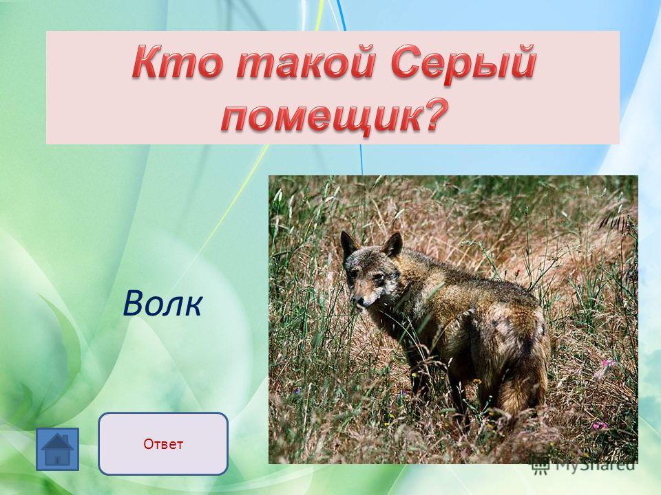Волк Ответ