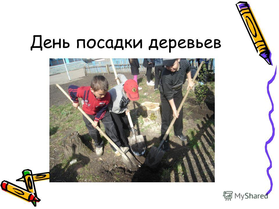 День посадки деревьев