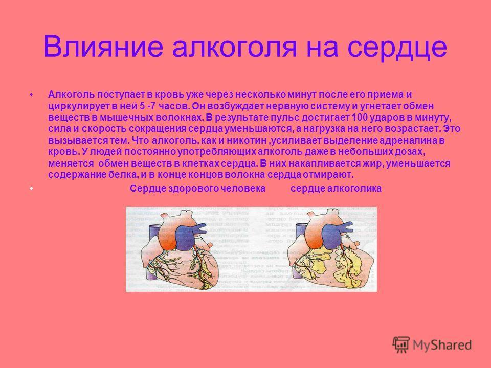 Влияние алкоголя на сердце Алкоголь поступает в кровь уже через несколько минут после его приема и циркулирует в ней 5 -7 часов. Он возбуждает нервную систему и угнетает обмен веществ в мышечных волокнах. В результате пульс достигает 100 ударов в мин