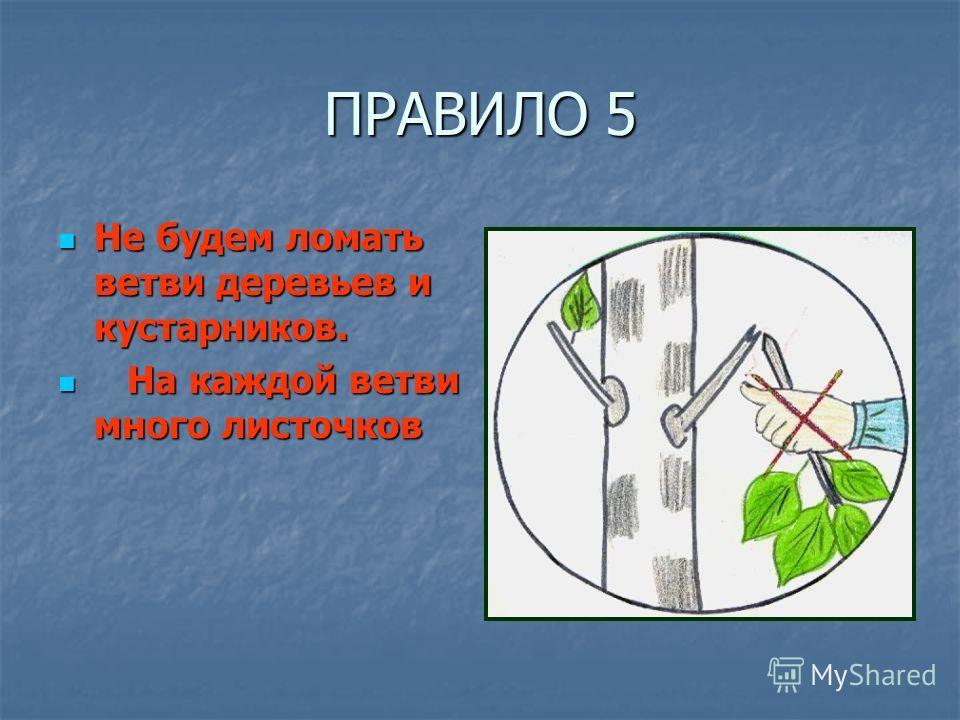 ПРАВИЛО 5 Не будем ломать ветви деревьев и кустарников. Не будем ломать ветви деревьев и кустарников. На каждой ветви много листочков На каждой ветви много листочков