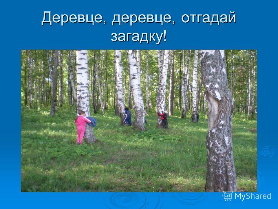 Деревце, деревце, отгадай загадку!