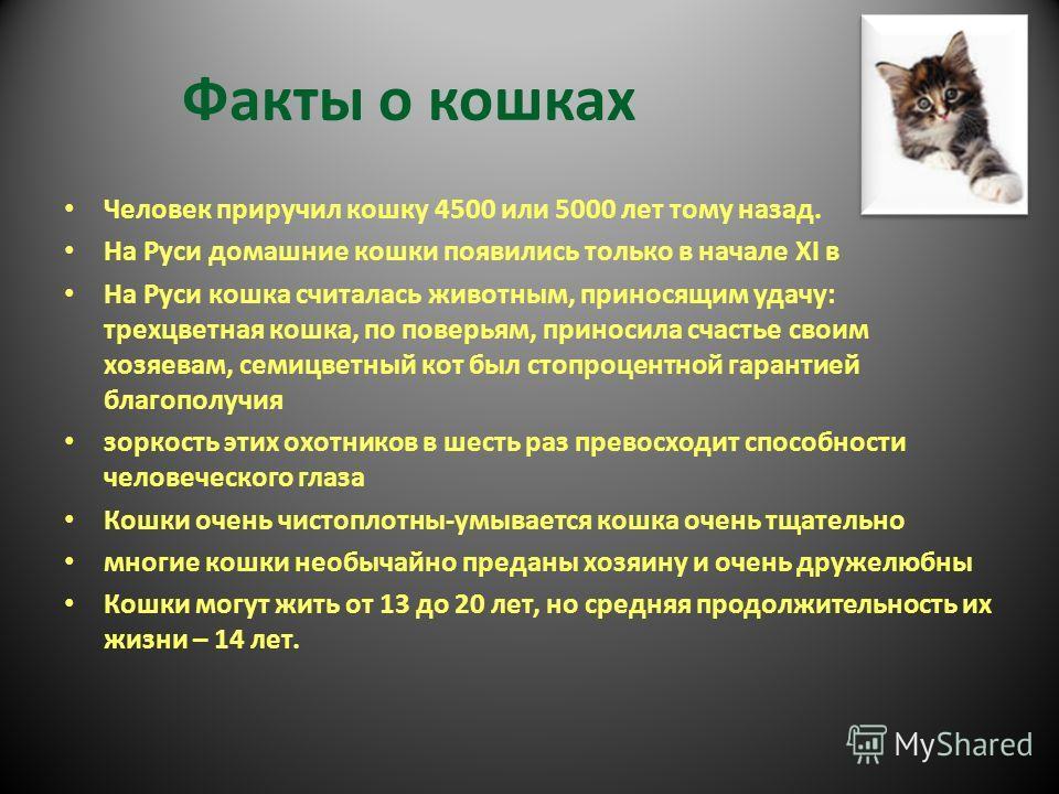 Факты о кошках Человек приручил кошку 4500 или 5000 лет тому назад. На Руси домашние кошки появились только в начале XI в На Руси кошка считалась животным, приносящим удачу: трехцветная кошка, по поверьям, приносила счастье своим хозяевам, семицветны
