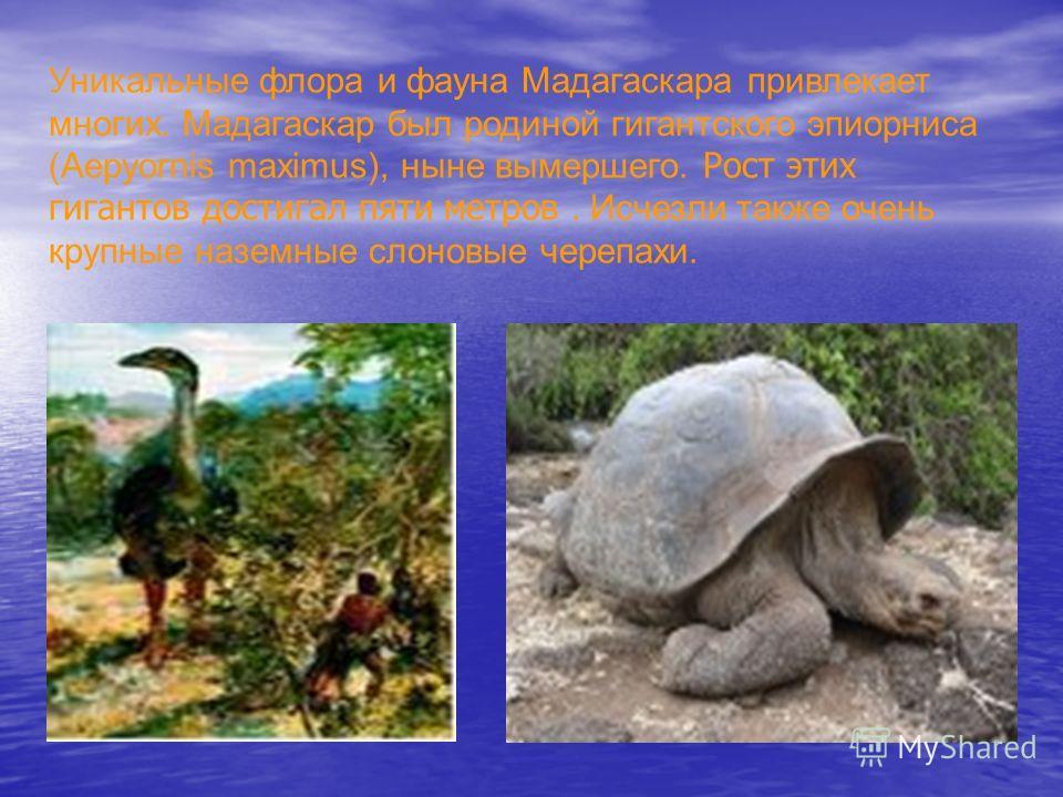 Уникальные флора и фауна Мадагаскара привлекает многих. Мадагаскар был родиной гигантского эпиорниса (Aepyornis maximus), ныне вымершего. Рост этих гигантов достигал пяти метров. Исчезли также очень крупные наземные слоновые черепахи.