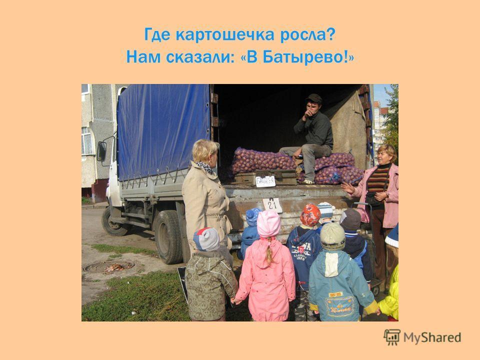 Где картошечка росла? Нам сказали: «В Батырево!»