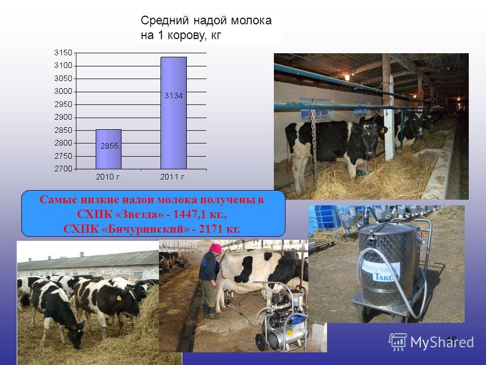 15 Средний надой молока на 1 корову, кг Самые низкие надои молока получены в СХПК «Звезда» - 1447,1 кг., СХПК «Бичуринский» - 2171 кг.
