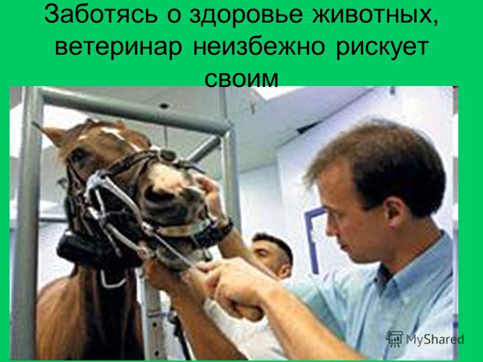 Заботясь о здоровье животных, ветеринар неизбежно рискует своим
