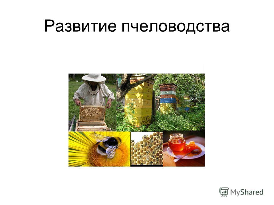 Развитие пчеловодства