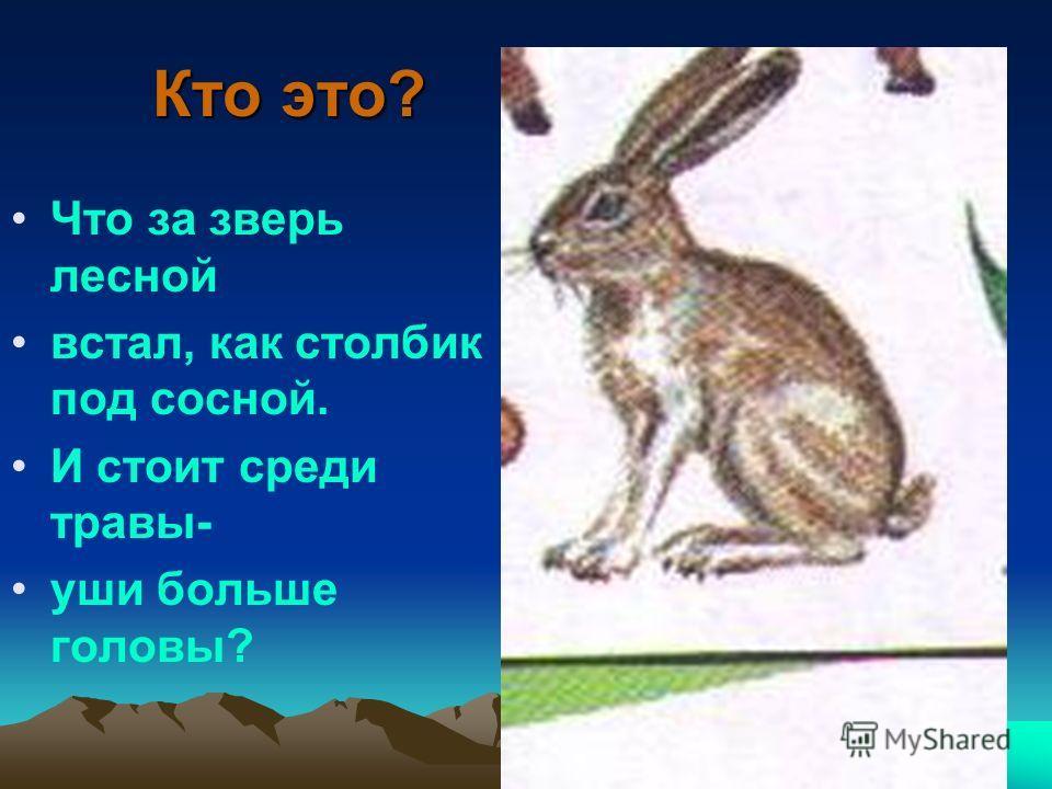 Кто это? Что за зверь лесной встал, как столбик под сосной. И стоит среди травы- уши больше головы?