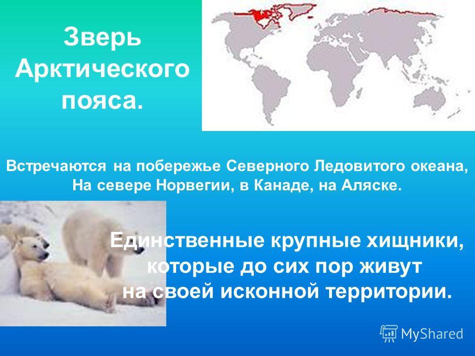 Зверь Арктического пояса. Встречаются на побережье Северного Ледовитого океана, На севере Норвегии, в Канаде, на Аляске. Единственные крупные хищники, которые до сих пор живут на своей исконной территории.