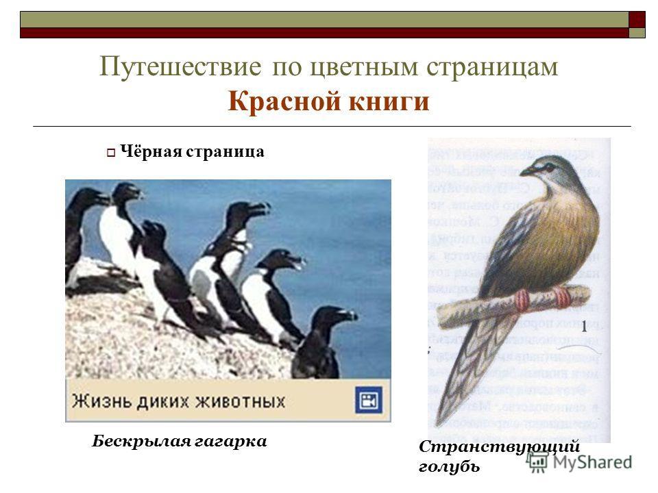 Путешествие по цветным страницам Красной книги Бескрылая гагарка Странствующий голубь Чёрная страница