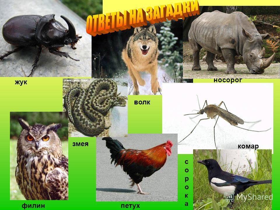5 жук филин волк комар петух носорог сорокасорока змея