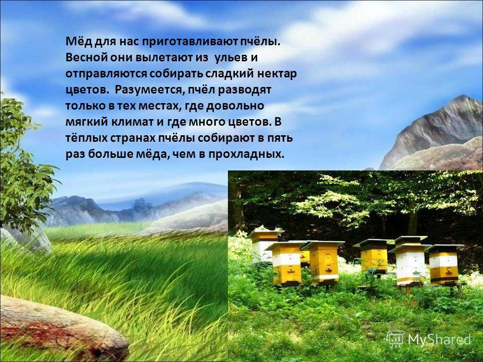 Мёд для нас приготавливают пчёлы. Весной они вылетают из ульев и отправляются собирать сладкий нектар цветов. Разумеется, пчёл разводят только в тех местах, где довольно мягкий климат и где много цветов. В тёплых странах пчёлы собирают в пять раз бол
