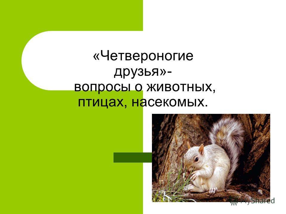 «Четвероногие друзья»- вопросы о животных, птицах, насекомых.
