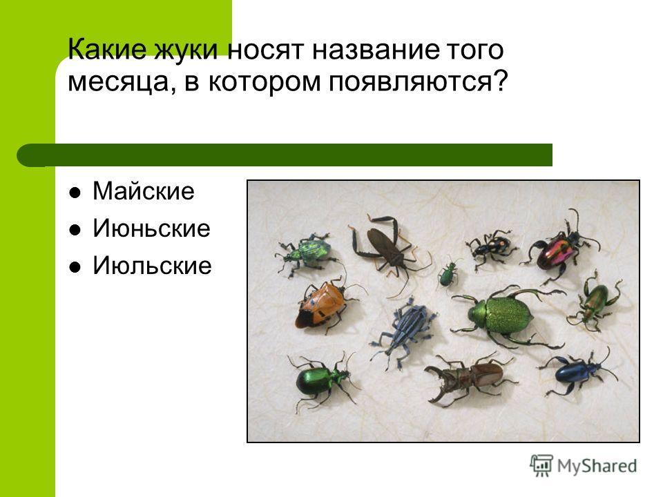 Какие жуки носят название того месяца, в котором появляются? Майские Июньские Июльские