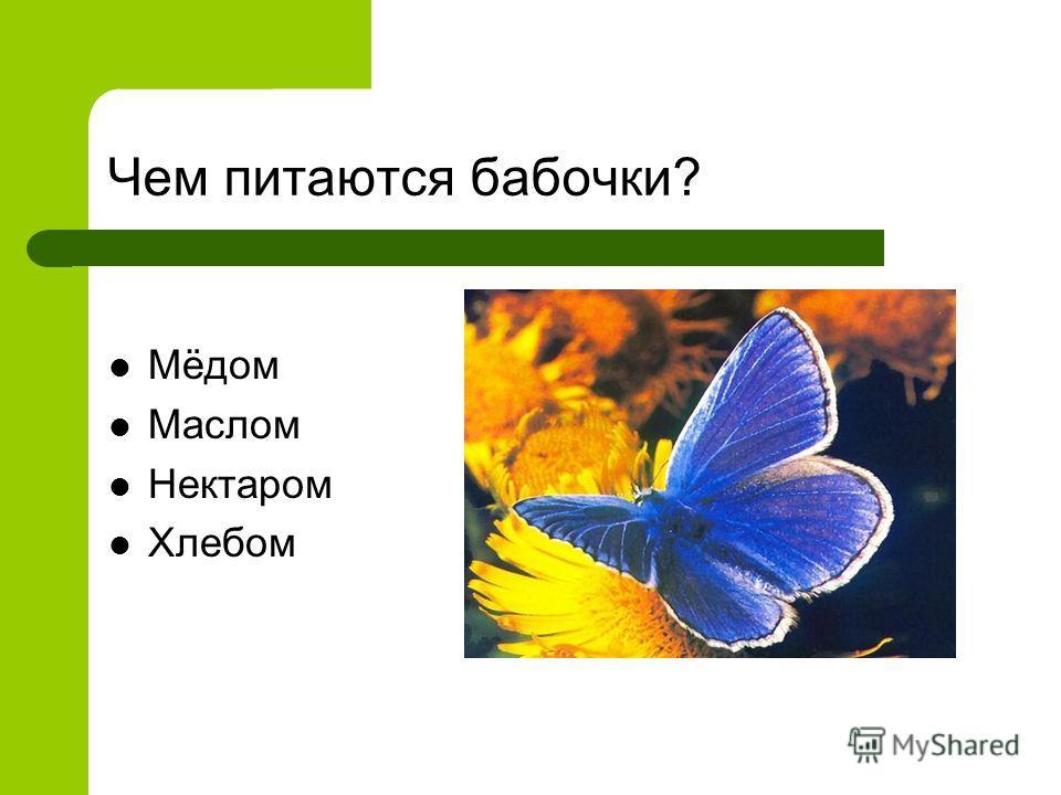 Чем питаются бабочки? Мёдом Маслом Нектаром Хлебом