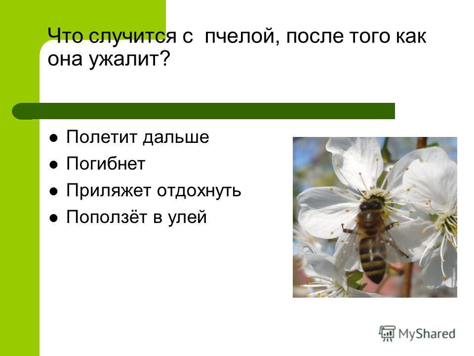 Что случится с пчелой, после того как она ужалит? Полетит дальше Погибнет Приляжет отдохнуть Поползёт в улей