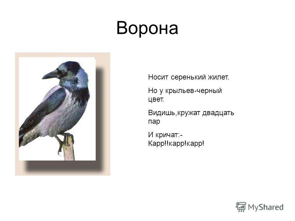 Ворона Носит серенький жилет. Но у крыльев-черный цвет. Видишь,кружат двадцать пар И кричат:- Карр!!карр!карр!