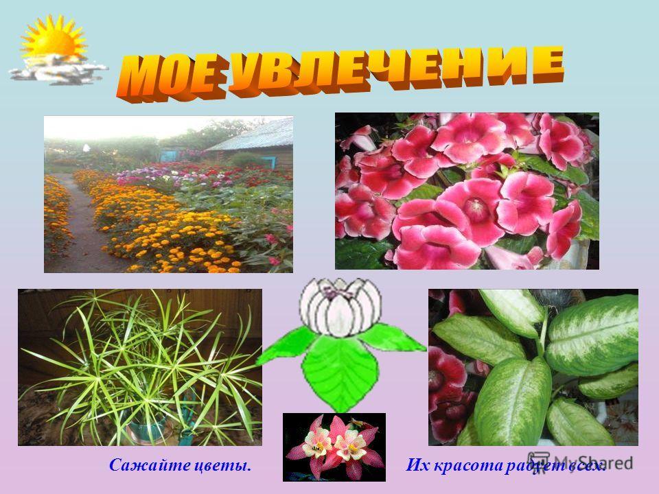 Сажайте цветы. Их красота радует всех.