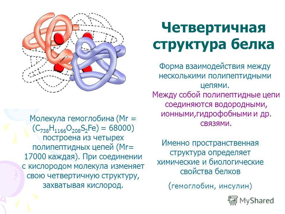 Четвертичная структура белка Форма взаимодействия между несколькими полипептидными цепями. Между собой полипептидные цепи соединяются водородными, ионными,гидрофобными и др. связями. Молекула гемоглобина (Mr = (C 738 H 1166 O 208 S 2 Fe) = 68000) пос