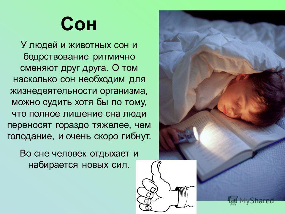 Сон У людей и животных сон и бодрствование ритмично сменяют друг друга. О том насколько сон необходим для жизнедеятельности организма, можно судить хотя бы по тому, что полное лишение сна люди переносят гораздо тяжелее, чем голодание, и очень скоро г