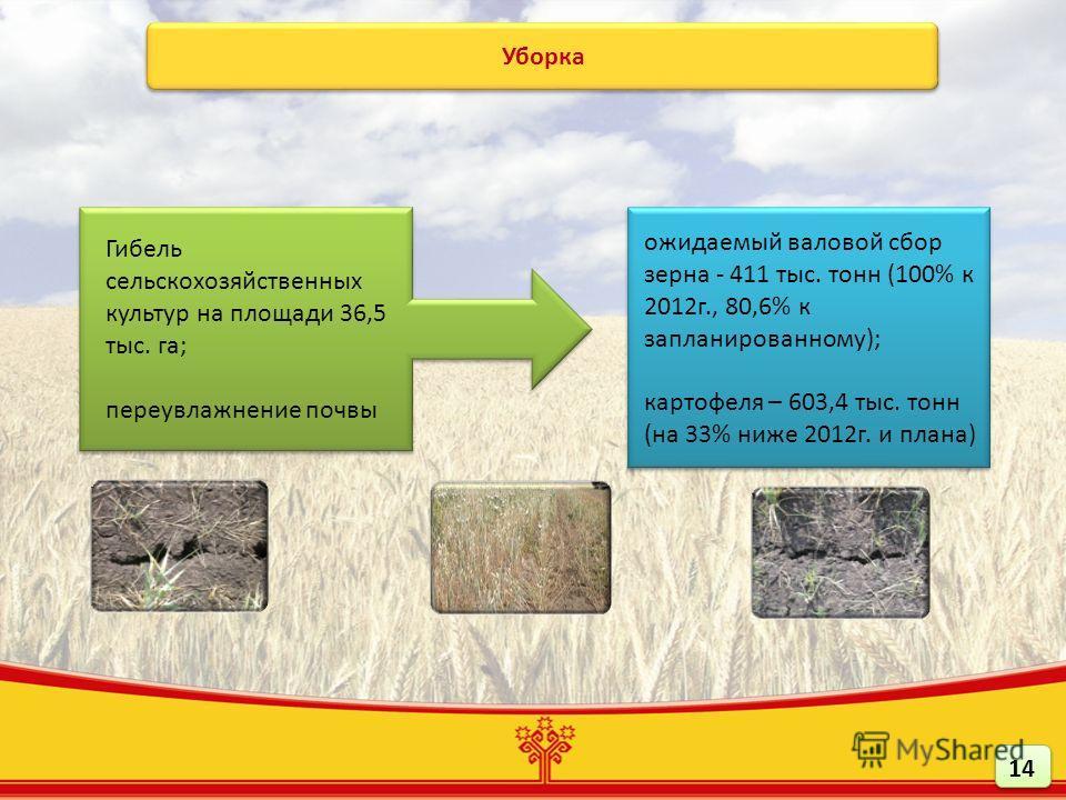Уборка Гибель сельскохозяйственных культур на площади 36,5 тыс. га; переувлажнение почвы Гибель сельскохозяйственных культур на площади 36,5 тыс. га; переувлажнение почвы ожидаемый валовой сбор зерна - 411 тыс. тонн (100% к 2012г., 80,6% к запланиров