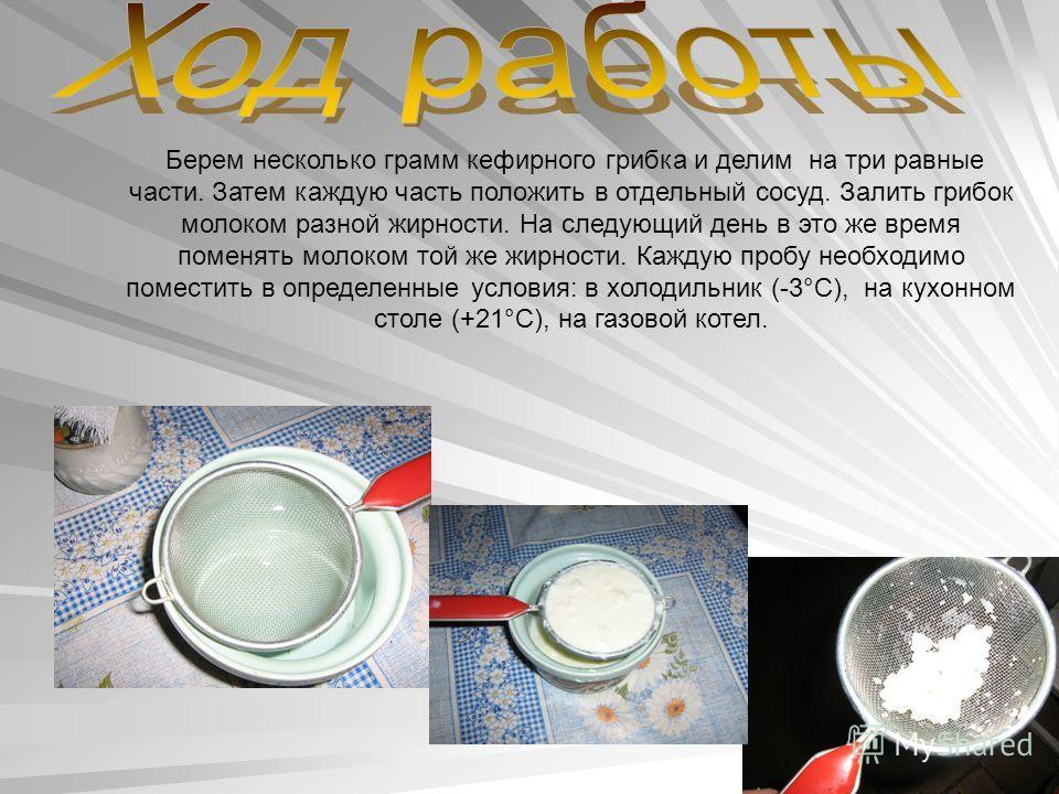 Берем несколько грамм кефирного грибка и делим на три равные части. Затем каждую часть положить в отдельный сосуд. Залить грибок молоком разной жирности. На следующий день в это же время поменять молоком той же жирности. Каждую пробу необходимо помес