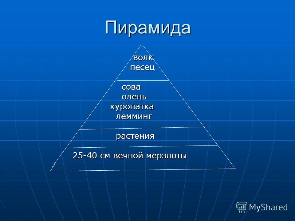 волк волк песец песец сова сова олень олень куропатка куропатка лемминг лемминг растения растения 25-40 см вечной мерзлоты 25-40 см вечной мерзлоты Пирамида