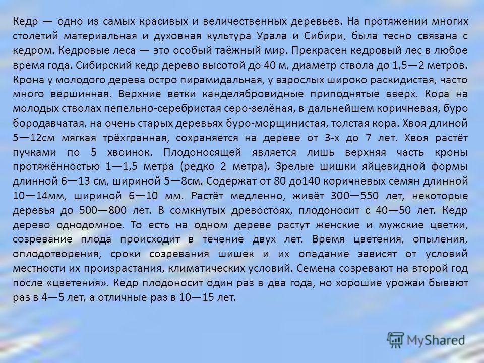 Кедр одно из самых красивых и величественных деревьев. На протяжении многих столетий материальная и духовная культура Урала и Сибири, была тесно связана с кедром. Кедровые леса это особый таёжный мир. Прекрасен кедровый лес в любое время года. Сибирс