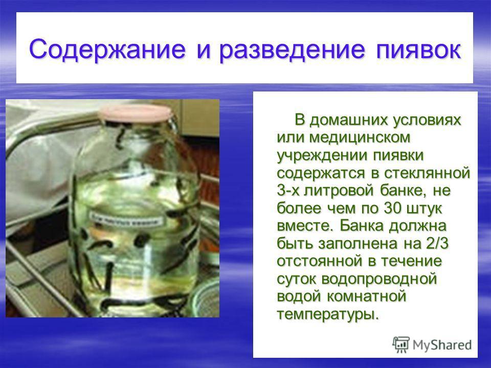 Содержание и разведение пиявок В домашних условиях или медицинском учреждении пиявки содержатся в стеклянной 3-х литровой банке, не более чем по 30 штук вместе. Банка должна быть заполнена на 2/3 отстоянной в течение суток водопроводной водой комнатн