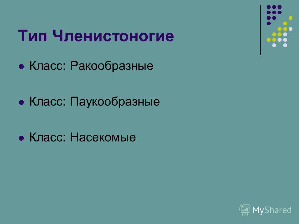 Тип Членистоногие Класс: Ракообразные Класс: Паукообразные Класс: Насекомые