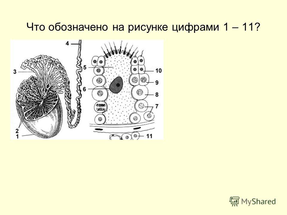 Что обозначено на рисунке цифрами 1 – 11?