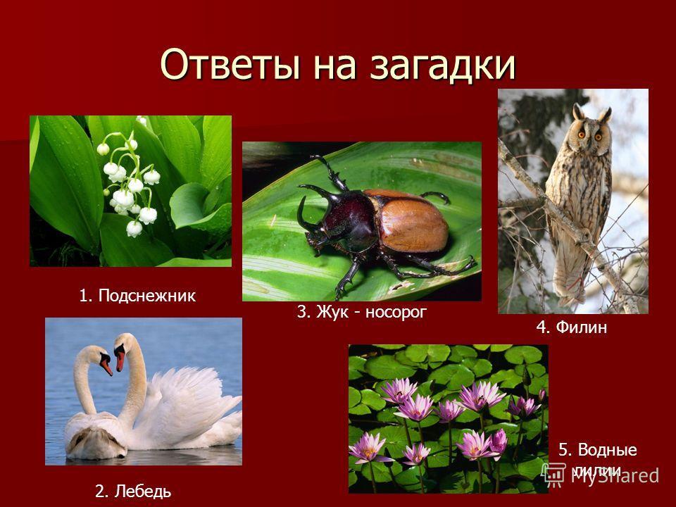 Ответы на загадки 1. Подснежник 2. Лебедь 3. Жук - носорог 4. Филин 5. Водные лилии