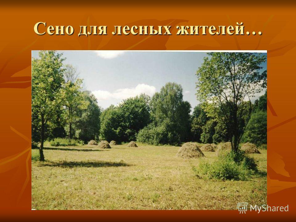 Сено для лесных жителей…