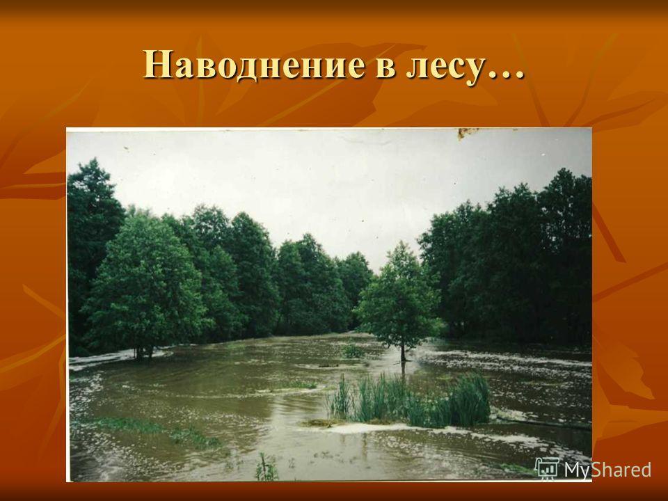 Наводнение в лесу…