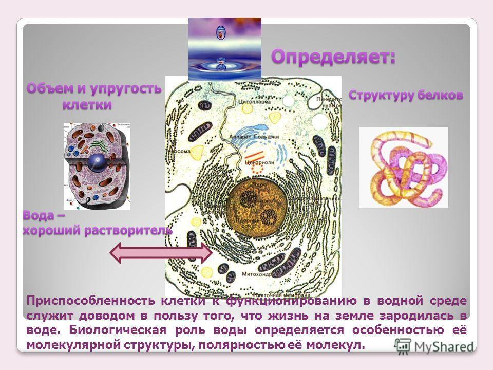 Приспособленность клетки к функционированию в водной среде служит доводом в пользу того, что жизнь на земле зародилась в воде. Биологическая роль воды определяется особенностью её молекулярной структуры, полярностью её молекул.