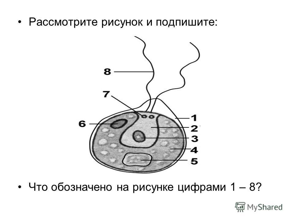 Рассмотрите рисунок и подпишите: Что обозначено на рисунке цифрами 1 – 8?