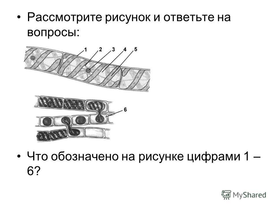 Рассмотрите рисунок и ответьте на вопросы: Что обозначено на рисунке цифрами 1 – 6?