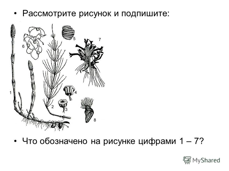 Рассмотрите рисунок и подпишите: Что обозначено на рисунке цифрами 1 – 7?