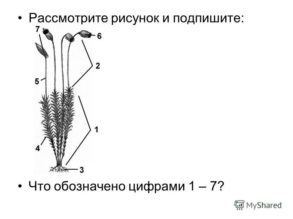 Рассмотрите рисунок и подпишите: Что обозначено цифрами 1 – 7?