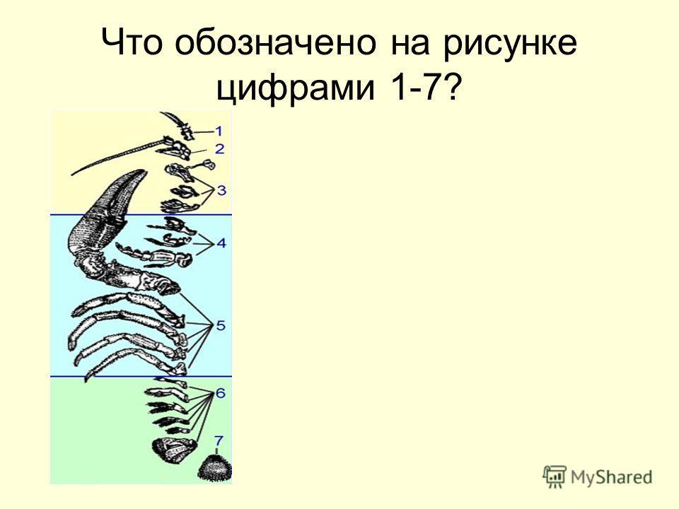 Что обозначено на рисунке цифрами 1-7?