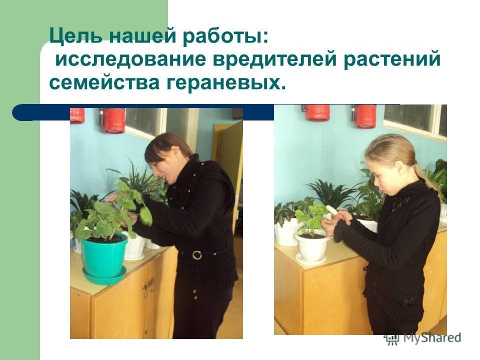 Цель нашей работы: исследование вредителей растений семейства гераневых.