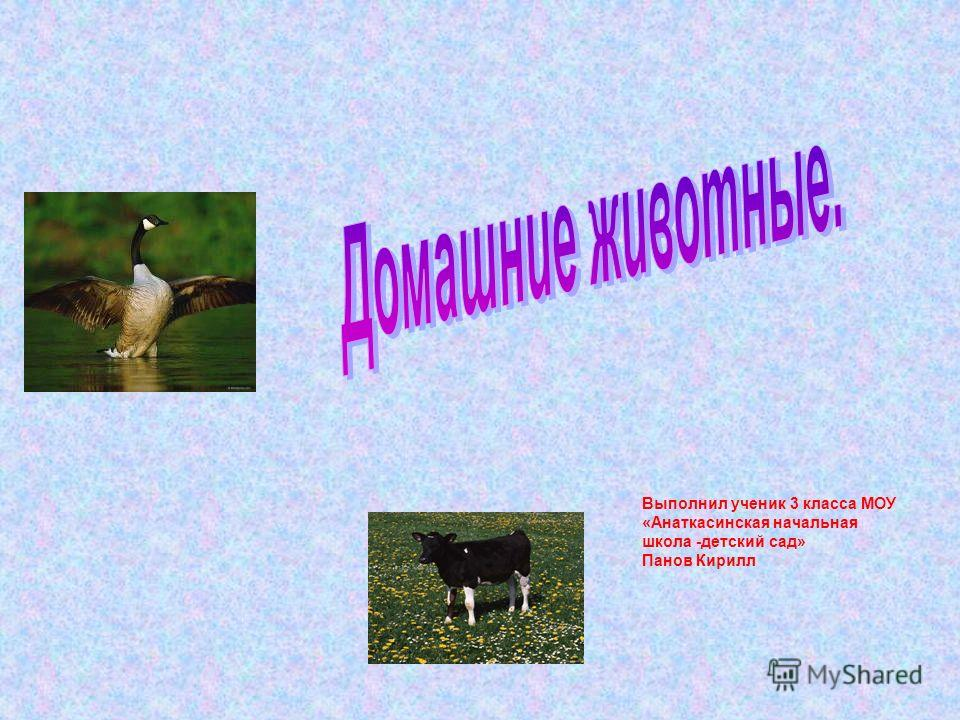 Выполнил ученик 3 класса МОУ «Анаткасинская начальная школа -детский сад» Панов Кирилл