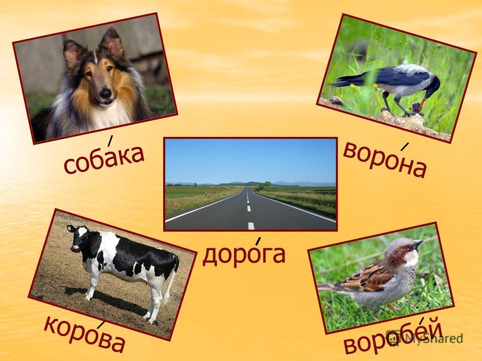собака ворона дорога корова воробей