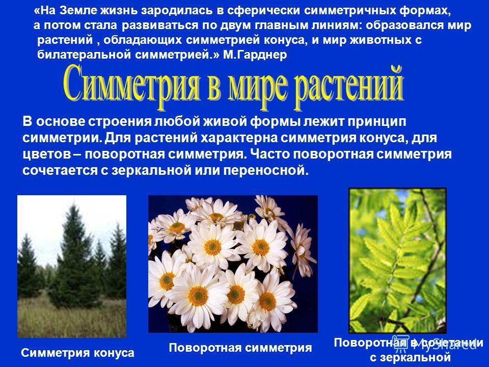 В основе строения любой живой формы лежит принцип симметрии. Для растений характерна симметрия конуса, для цветов – поворотная симметрия. Часто поворотная симметрия сочетается с зеркальной или переносной. Симметрия конуса Поворотная симметрия Поворот