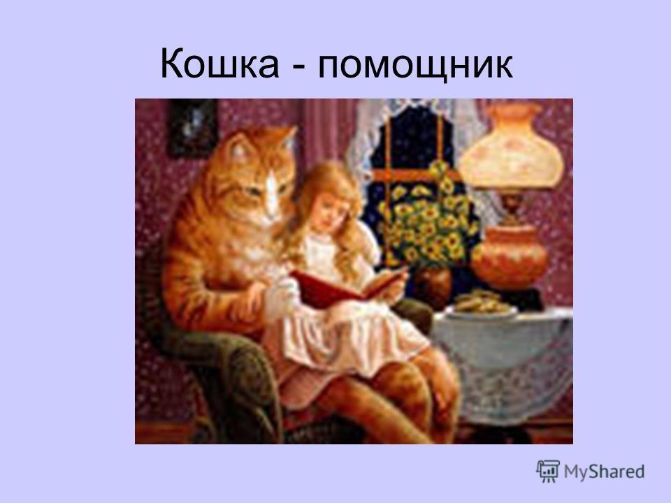 Кошка - помощник