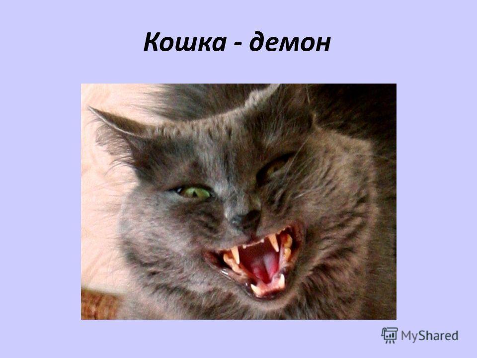 Кошка - демон