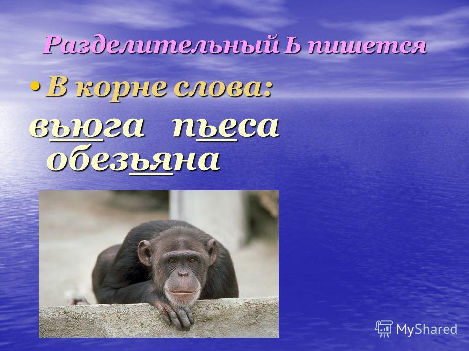 Разделительный Ь пишется В корне слова: В корне слова: вьюга пьеса обезьяна